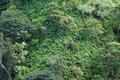 Close-up of lush tropical rain-forest hillside Royalty Free Stock Photo