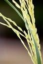 Close-up Macro of Grass Stalk Detail Stock Photos