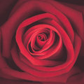 A close up macro shot of red rose, vintage tone Royalty Free Stock Photo