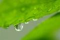 Close up macro shot water drop Royalty Free Stock Photo