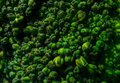 Close up Macro Texture of Natural Organic Brocolli Upper Part Royalty Free Stock Photo