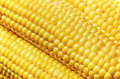 Close-up of maize Royalty Free Stock Image