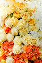 Close up many colorful yellow rose for wedding & flower background. Royalty Free Stock Photo