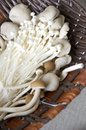 Close up many kinds of mushrooms in basket Royalty Free Stock Photo