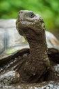 Close-up Of Muddy Galapagos Gi...