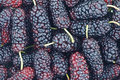 Close up mulberry fruits Stock Photography