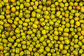 Close up of mung bean background wet Stock Photo