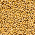 Close up of mustard seeds Royalty Free Stock Photos