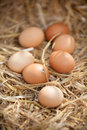Close up of nutritious brown eggs on straw rustic Stock Photo