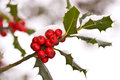 Close up od a branch of holly with red berries Royalty Free Stock Photo