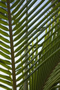 Close-up of palm frond against blue sky. Royalty Free Stock Photography