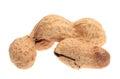 Close up of peanut.