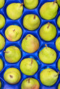 Close up of pears in blue plastic tray Stock Photos