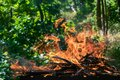 Close-up photo of a flame from brushwood that burns out in a grill for charcoal for a barbecue. Royalty Free Stock Photo