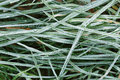 Close up photo of frosty morning grass chilling Stock Images