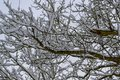 Tree Branches Covered with Snow in French Countryside during Christmas Season / Winter