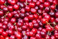 Close up of pile of ripe cherries with stalks. Large collection of fresh red cherries. Ripe cherries background Royalty Free Stock Photo