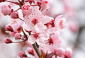 Close up of pink blossom on tree Stock Image