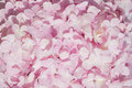 Close up Pink Hydrangea flowers detail  nature Abstract texture background Royalty Free Stock Photo
