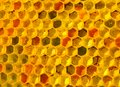Close Up Pollen In Honeycombs