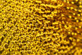 Close up pollen sunflower Royalty Free Stock Photo