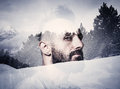 Close up portrait of a brutal man with mohawk bearded Royalty Free Stock Images