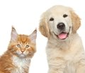 Close-up portrait of cat and dog in front of white background Royalty Free Stock Photo