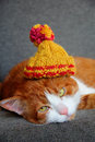 Close up portrait of a cat in a knitted cap Stock Photo