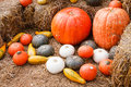 Close up pumpkins gourds straw Royalty Free Stock Image