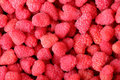 Close-up raspberry background Royalty Free Stock Photography