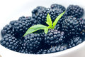 Close up of ripe blackberries in a white ceramic bowl. Soft focu Royalty Free Stock Photo
