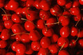 Close up of ripe cherries Royalty Free Stock Images
