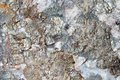 Close up rock or stone texture background Royalty Free Stock Image