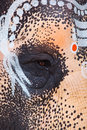 Close up of sacred elephant eye in Hindu temple Royalty Free Stock Photo