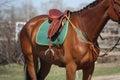 Close up of saddle on horse back Royalty Free Stock Photo