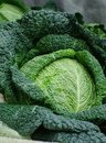 Close up of savoy cabbage for sale in market of Brugge. Belgium Royalty Free Stock Photo