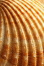Close-up of a sea shell Royalty Free Stock Photo