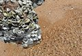 Ripples and rocks Royalty Free Stock Photo