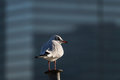Close up of a Seagull on a railing Royalty Free Stock Photo