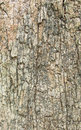 Close up shot of brown tree bark texture Royalty Free Stock Photography