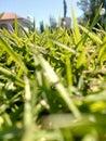 Macro blades of grass