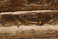 Close up shot of old wooden planks to build a cabin Royalty Free Stock Photo