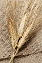 Close up shot of wheat Stock Images
