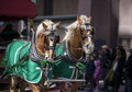 Close up shots horses pulling carriage Stock Image