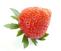 Close-up of single delicious bio strawberry Royalty Free Stock Photo
