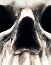 Close up of Skull Royalty Free Stock Image
