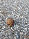 Close up, snail in road Royalty Free Stock Photo