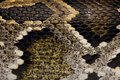 Close-up of snakeskin Royalty Free Stock Photography