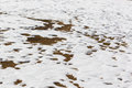 Close up snow texture thawing snow for the background Royalty Free Stock Image