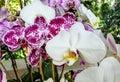 Su fiorire